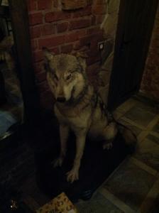 Wilk z Rosgarten